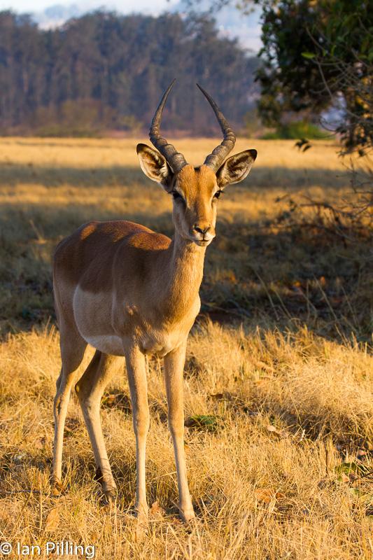20120812-Africa-6214-epson-semi.jpg