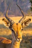 20120812-Africa-6214-epson-semi_v1.jpg